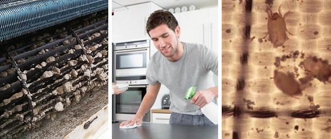 Limpieza un hogar con mucho oficio - Plaga de hormigas en mi casa ...