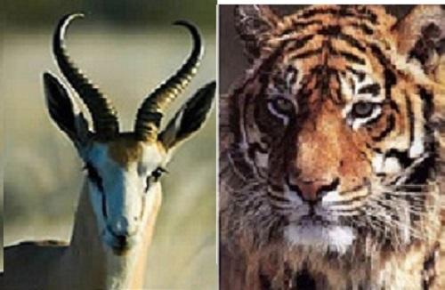 Por qué los animales herbívoros tienen los ojos dispuestos para una visión lateral