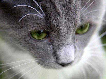 ¿Cuál es la función de los bigotes de un gato?