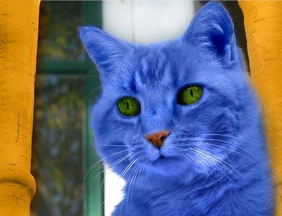 ¿Por qué el gato de la canción de Roberto Carlos era de color azul?