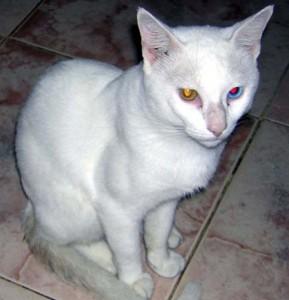 ojos rojos y gatos