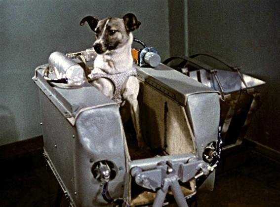 El día que la perrita Laika fue enviada al espacio