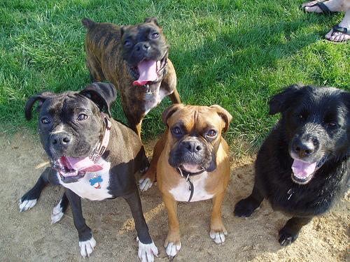 ¿Cuál es el origen de la expresión 'Echarle a uno los perros'?