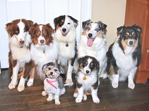 Media docena de curiosidades con perros como protagonistas [#DíaPerroSinRaza]