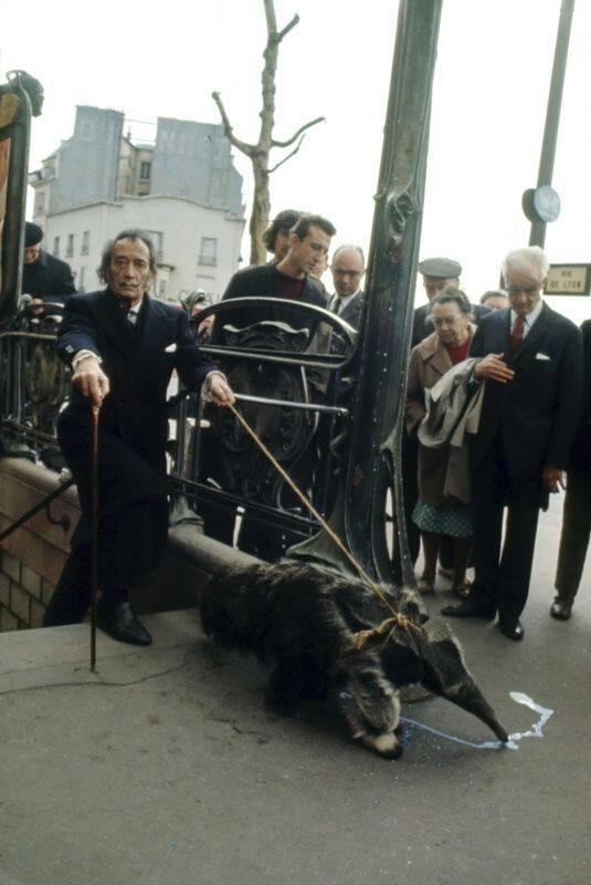 Cuando Dalí puso de moda entre la alta sociedad parisina tener un oso hormiguero como mascota