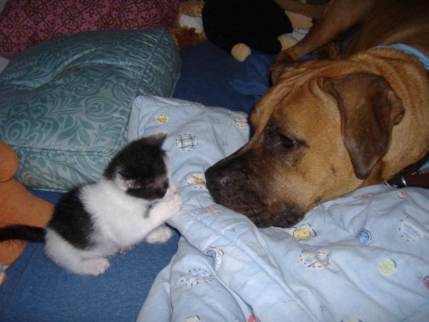 ¿Sabías que el término 'mascota' con el que nos referimos a los animales de compañía significa 'amuleto'?