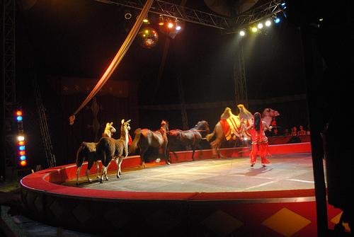 ¿Por qué las pistas de circo son redondas?