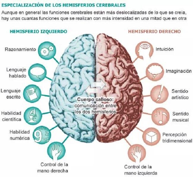 ¿Cuáles son las habilidades que se desarrollan en cada uno de los hemisferios que nuestro cerebro?
